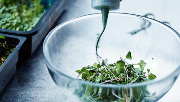 Salade Ikea